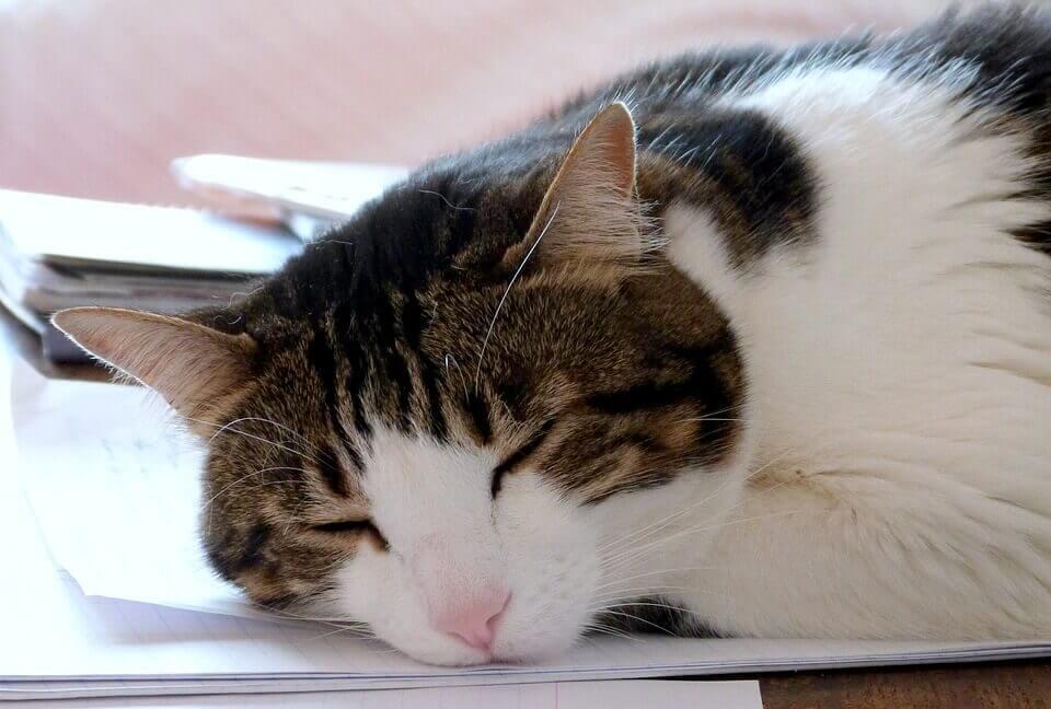 二度寝を防ぐ防止策!遅刻しない為の効果的な対策とは?